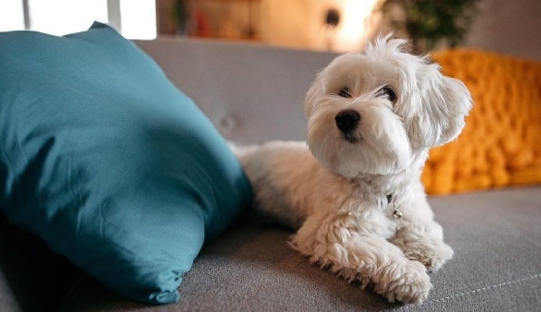 Animal de estimação em condomínio: é permitido? Existe lei?