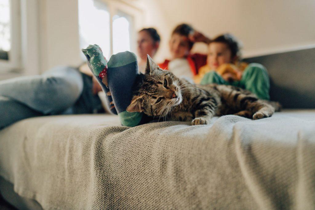gato em condomínio